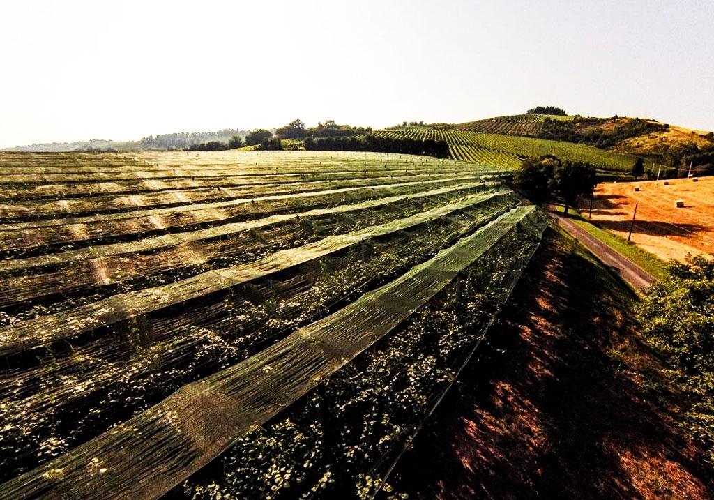 consorzio-frutteto-slide-home-01
